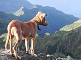 Santo Ant�o : Pico da Cruz Lombo Carrosco : dog : Nature Animals
