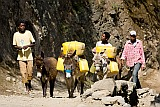 Santo Antão : Cova de Paúl : fetching water with donkey : People Work