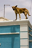 Sal : Santa Maria : dog : Nature Animals