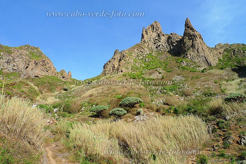 São Nicolau : Canto de Faija : Hiing Trail with dragon tree : Nature Plants